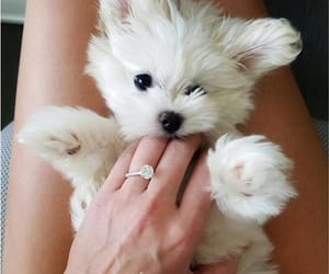 dog, puppy, and ring image