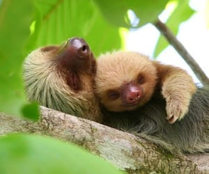animal, sloth, and nature image