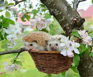 animals, blooming, and hedgehog image