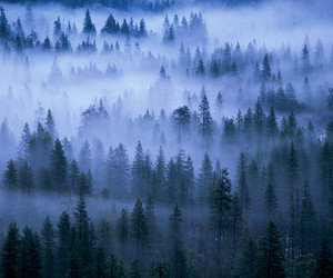 forest, fog, and tree image