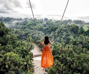 jungle image