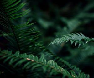 dark, green, and plants image