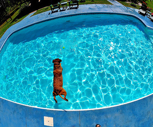 dog, pool, and photography image