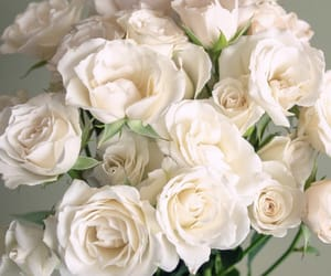gift, roses, and white image