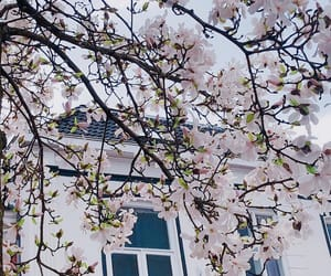 aesthetics, beautiful, and blossom image