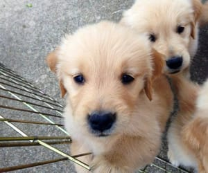 adorable, cute dog, and dogs image