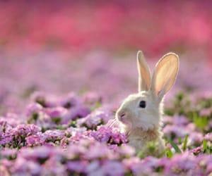 flowers, purple, and rabbit image