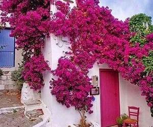colors, flowers, and Greece image