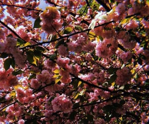 air, april, and pink image