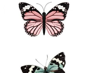art, colores, and mariposa image