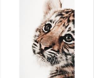 animal, tigre, and salvaje image