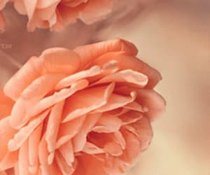 beautiful, flowers, and gif image