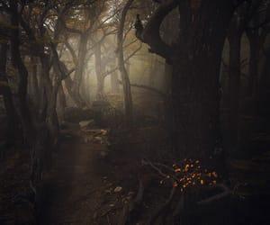 nature, woods, and dark woods image