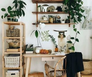 plants, home, and decor image