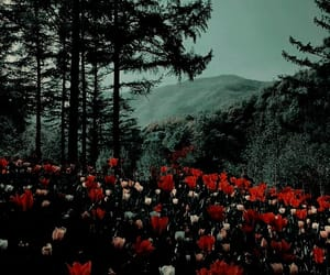 flowers, aesthetic, and green image