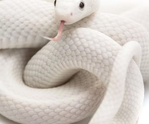 snake, white, and aesthetic image