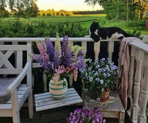 adventure, cat, and flowers image