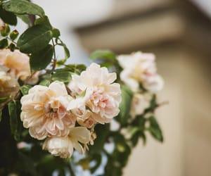 boboli gardens, florence, and garden image