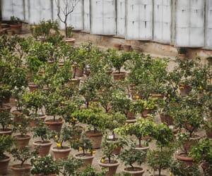 boboli gardens, italy, and florence image