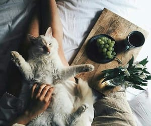 aesthetic, lovely, and cosy image