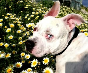 beauty, blue eye, and daisies image