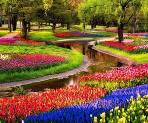 europe, flowerbed, and netherlands image