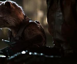 Avengers, rocket raccoon, and gif image