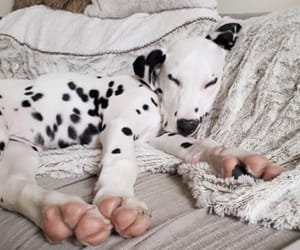 animals, dogs, and nap image