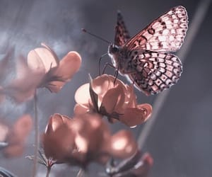 butterfly, flowers, and dreamy image