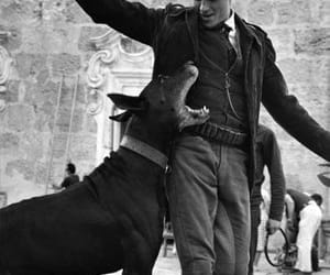 Alain Delon, dogs are love, and dogs are family image