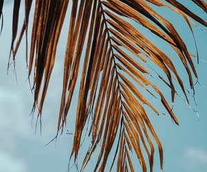 blue, palm trees, and wallpapers image