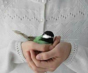 bird, عصافير, and hand image