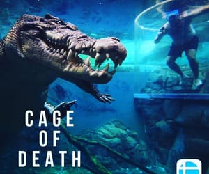 crocodiles, thrillpixx, and cage of death image