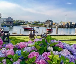 flowers, hydrangea, and travel image