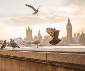 article, london, and attractions image