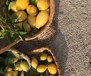 fruit, lemon, and aesthetic image