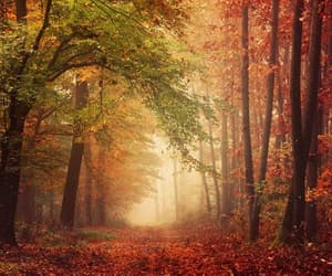 etsy, forest photography, and autumn poster image