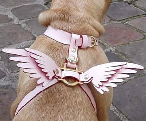 dog and wings image