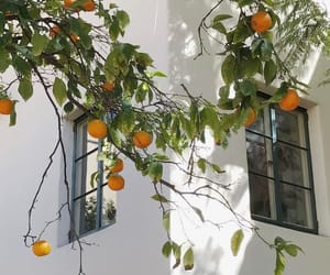 orange, fruit, and summer image