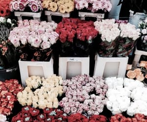 flowers, aesthetic, and roses image