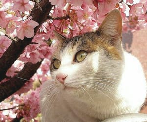 animal, blossom, and cat image