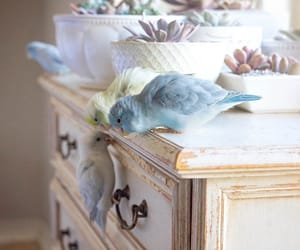 beautiful, birds, and decor image