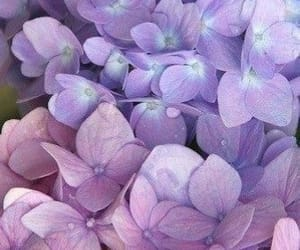 aesthetic, lilac, and mood board image