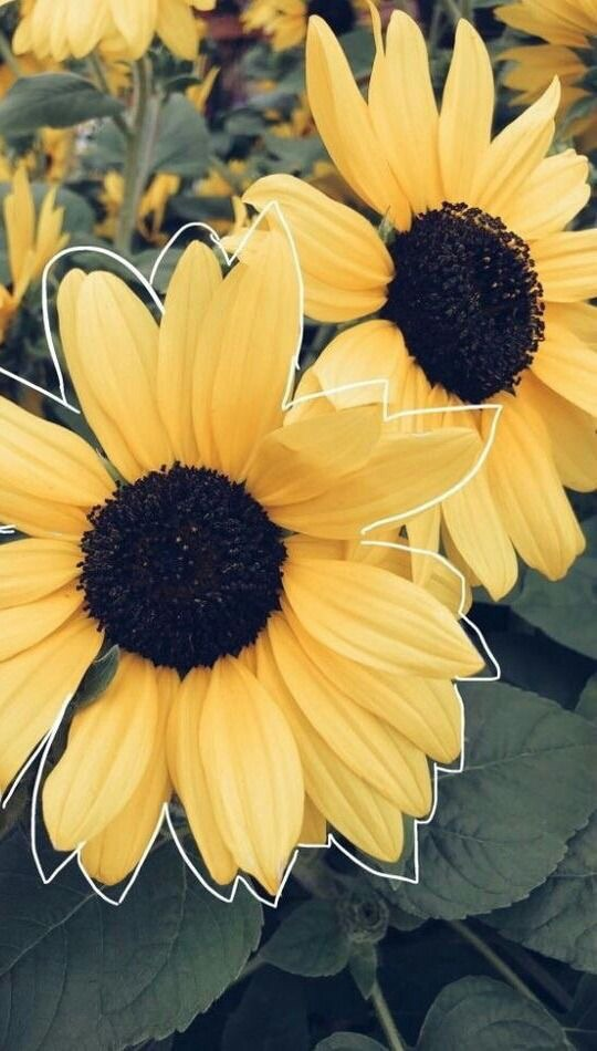 tumblr in Flowers by naomy26 on We Heart It