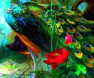 ave, pavão, and colorido mágico image