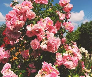 blossom, tumblr, and flowers image