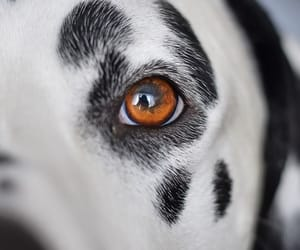 animals, close-up, and dogs image
