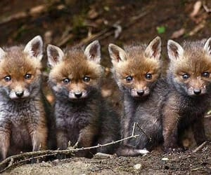 cubs, nature, and wildlife image