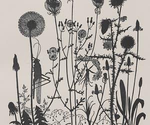 botany, dandelion, and illustration image