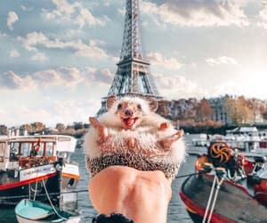 animals, france, and happy image